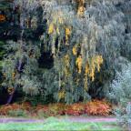 Herbst in Velvia