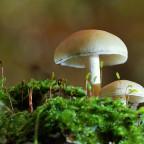 Pilze im Wald 6