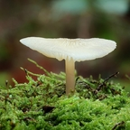 Pilze im Wald 2