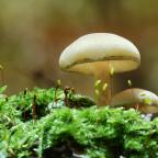 Pilze im Wald 5