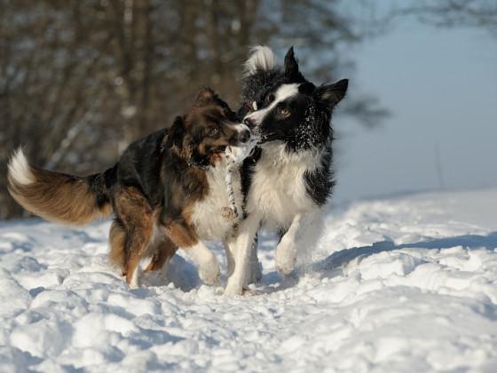 Unsere Hundefreunde