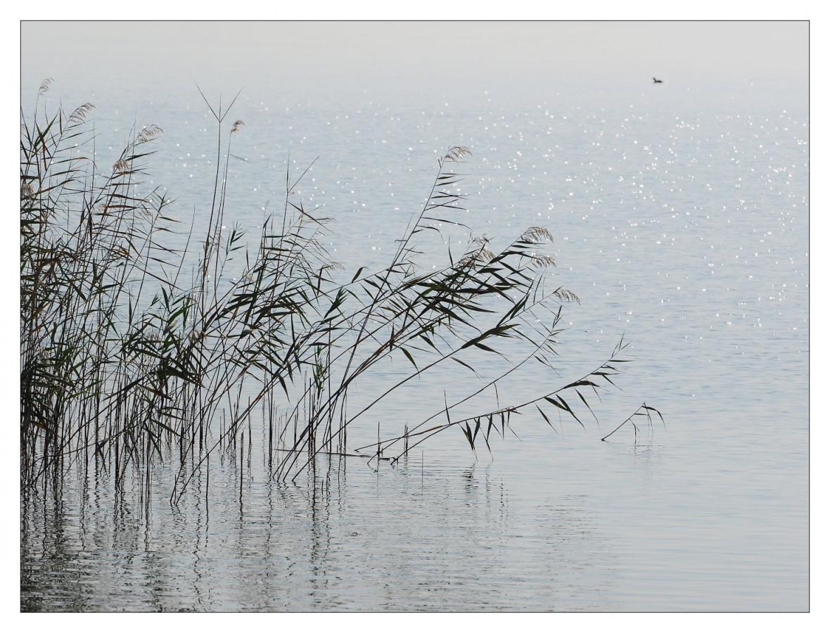 Morgenstimmung am Gardasee